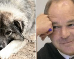 Judge is sick of animal abusers, decides to punish them with a taste of their own medicine