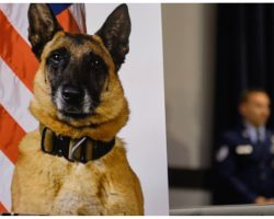 Military Airmen Gather For Touching Tribute To Dog Who Saved Their Lives