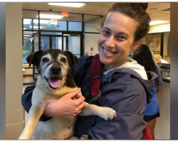 Dog Mom receives tear-jerking phone call, Missing dog found 5 years later
