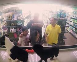 Pet Store Replaces All Its Animals With Rescue Pets And Customers Fall In Love