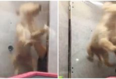 Pet Store Employee Fired After Video Shows Puppies Being Roughly Thrown Into Cage