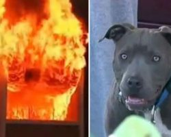 Fire burns house with baby inside, then mom spots pit bull dragging baby out by her diaper