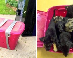 Shelter Worker Is Horrified To Find Dying Puppies Packed In A Taped Box In Rain