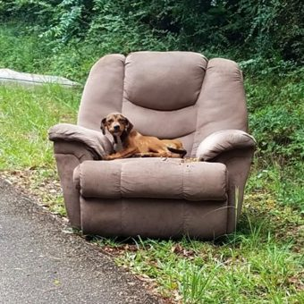 Starving Puppy Dumped On Road In Chair Was Too Afraid To Leave It To Find Food