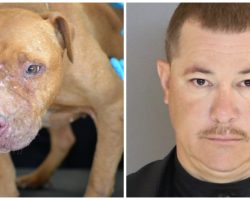 Illegal Dogfighting Operation Busted, Suspect Faces 135 Years In Prison