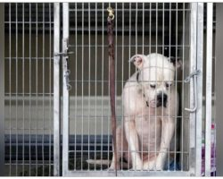 Sad Photo Of Hopeless Dog Dumped At Shelter Captures Hearts And Clicks