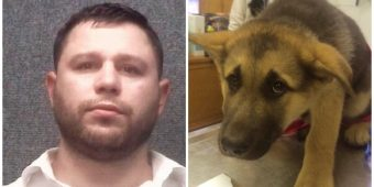 """Pooch Near Death, Police Could Smell """"Disease And Infection From The Hallway"""""""