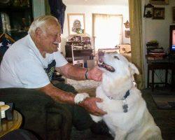 Senior Veteran Rescues Fellow Sailor's Senior GSD From Euthanasia