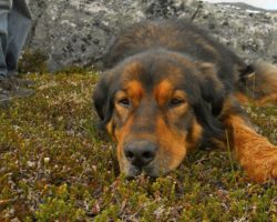 16-Year-Old Dog Laid It On The Line For The Ones He Loved Most In Life