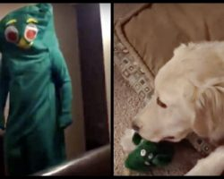 Dog's Favorite Toy Comes To Life (And She Loses Her Mind!)