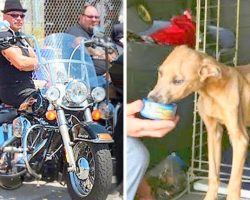 Tattooed Biker Gang On A Mission To Save Abused Pets, Confront Abusive Owners