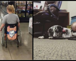 Teen Tells Stranger Not To Pet Her Service Dog And Has Seizure When He Doesn't Listen