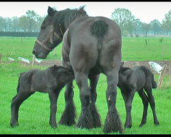 Rare 4 Day Old Twin Horses Love on Mama Horse, Video Leaves Us Swooning