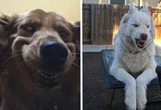 People Are Posting Their Most Unflattering Pet Pics, But They're So Adorable