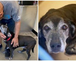 Eviction Drove Him To Drop His Pup At Shelter – Strangers Rallying To Reunite Them