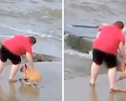 Woman Caught Repeatedly Throwing Puppy Into Lake, Police Refuse To Take Action
