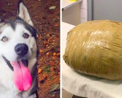 Woman Devastated As Kennel Says Her Dog Died, And Wrapped Her Up Like A Package