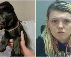 Woman Tormented & Disfigured Her Puppy For Weeks To 'Keep Her Quiet'