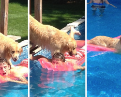 15 Jerk Pets Caught Doing Jerk Things
