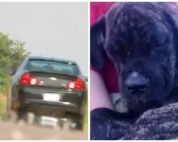 Sheriff's Office Needs Help Finding Who Dumped Four Dogs On Busy Highway