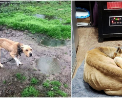 'Bad Dog' Was Chained To A Pole In Mud For 5 Years And Feels Warmth For First Time