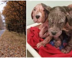 Dumped Bald Puppies Clung On As Traffic Whizzed Past, Kiss Every Human They Meet