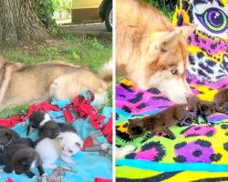 PTSD Service Dog Doubles Up As Foster Mama For 7 Dying Kittens Dumped In A Box