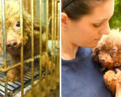 She Was Caged In Dark Puppy Mill Basement & Used As A Puppy Machine All Her Life