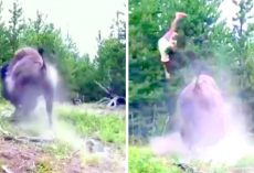Angry Bison Charges & Tosses Kid In The Air, Parents Leave Kid Behind & Run Away