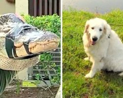 75-Yr-Old Grandpa Kicks & Punches Alligator, Saves Dog From Becoming Gator-Lunch