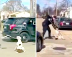 Brutal Cop Repeatedly Tazes Terrified Runaway Dog, Arrests Woman Who Protested