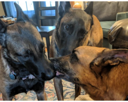 Dogs Kiss Their Ailing Brother As They Say Their Final Goodbye