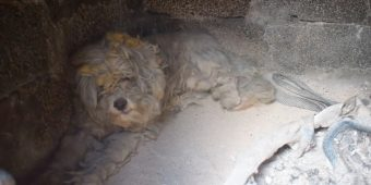 Terrified Dog Found Alive After He Sought Refuge In An Oven During Greece Wildfires