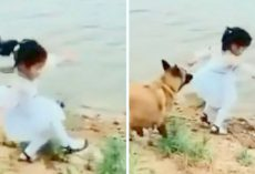 Girl Trips Over Trying To Fetch Ball, Loyal Dog Pulls Her Back And Saves Her Life