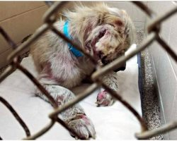 Dog Riddled With Wounds Refused To Look At Anyone As They Walked By His Kennel