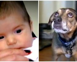 Rescue Dog Knew The Baby Wasn't Breathing So He Rushed To Wake Up Mom And Dad