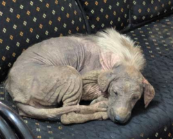 Stray Wanders Into Shelter On Her Own And Feels Safe Enough To Fall Asleep