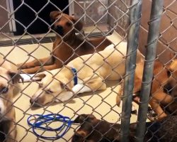 Odd Epidemic Of Abandoned Animals Is Overwhelming Desperate Animal Shelter