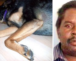 Dog Dies A Slow Death After Heartless Owner Refuses To Feed Him A Single Meal