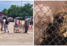 Line Of Pets Surrendered At Animal Shelter Is 2-1/2 Hours Long, Staff Overwhelmed