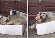 Her Cardboard Box Is Crumbling, Her Blanket Is Filthy And It's Time For A Home