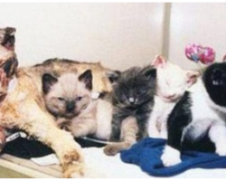 Hero Mama Cat Walks Into Burning Building 5 Times To Rescue Kittens