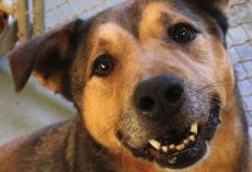 Dog's So Happy To Be In A Home After 2,381 Days In The Shelter