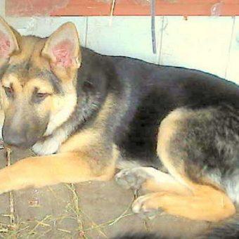 After 2381 Days Of Rejection, Sad Shelter Dog Restricts Himself To A Lonely Corner