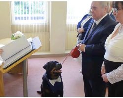 Rottweiler Not Allowed To Play With Others At Shelter Becomes His Dad's Best Man