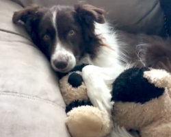 After Losing His Best Friend To Cancer, Dog Finds Comfort In A New Buddy