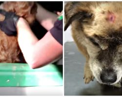 Screams From The Dark Uncover Old Dog Hit By Hammer, Disposed Of Like Rubbish