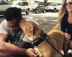 Football Player Walks Into Shelter And Asks For Their 'Least Adoptable Dog'