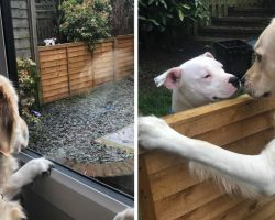 Dog Moves Into Neighborhood, Falls In Love With The Pooch Next Door