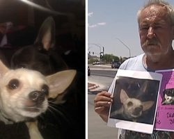 Distraught Man Frantically Searching For Lost Dog Offers His Own Home As A Reward